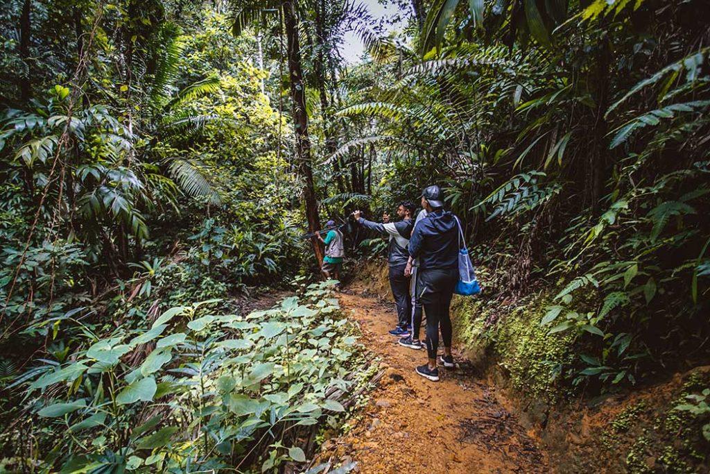 Hiking in Tobago